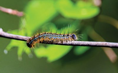 Up on Caterpillar Hill