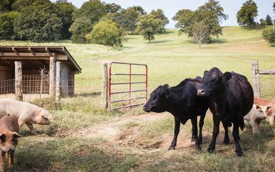 Sheepy Hollow Farms: Farming wellness for the land and community